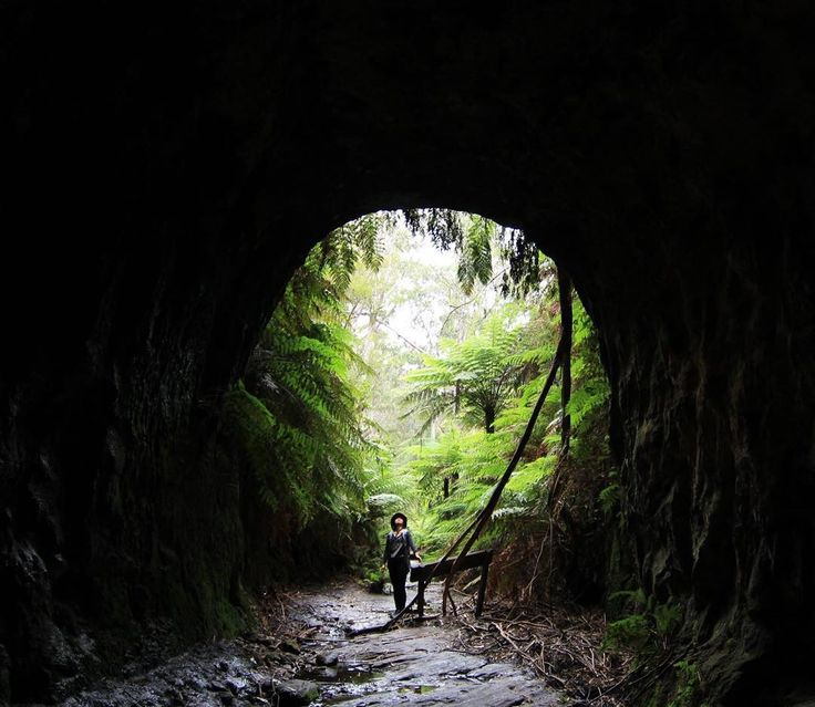 Glow Worm tunnel, NSW (Blue Mountains -Wollemi National Park)