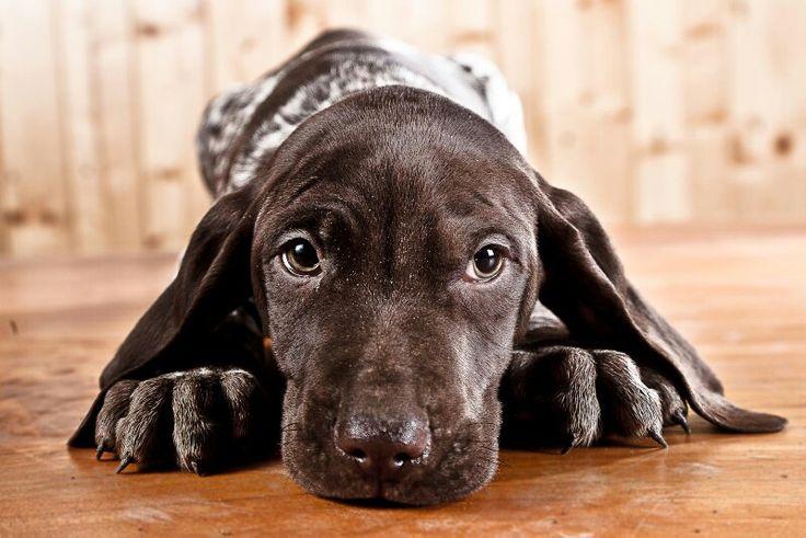 Puppy ogen look❤️