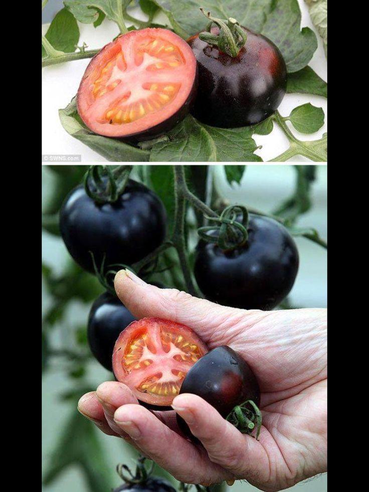 Siyah domates..
