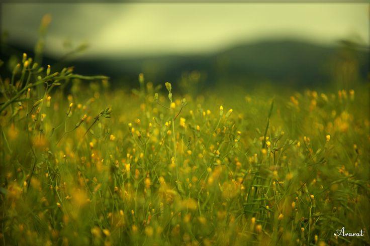 Warm mood in field