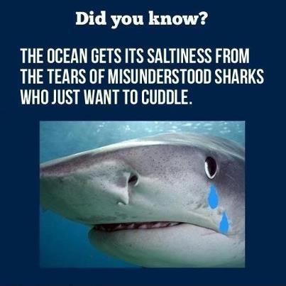 Poor Sharkies :'(  I'll love you!!