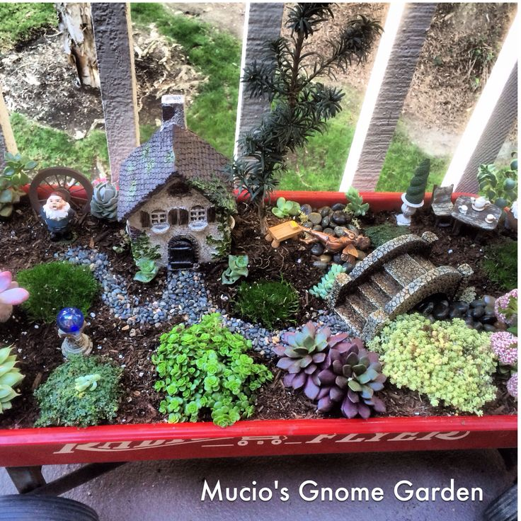 Gnome In Garden: My Fairy Garden / Gnome Garden