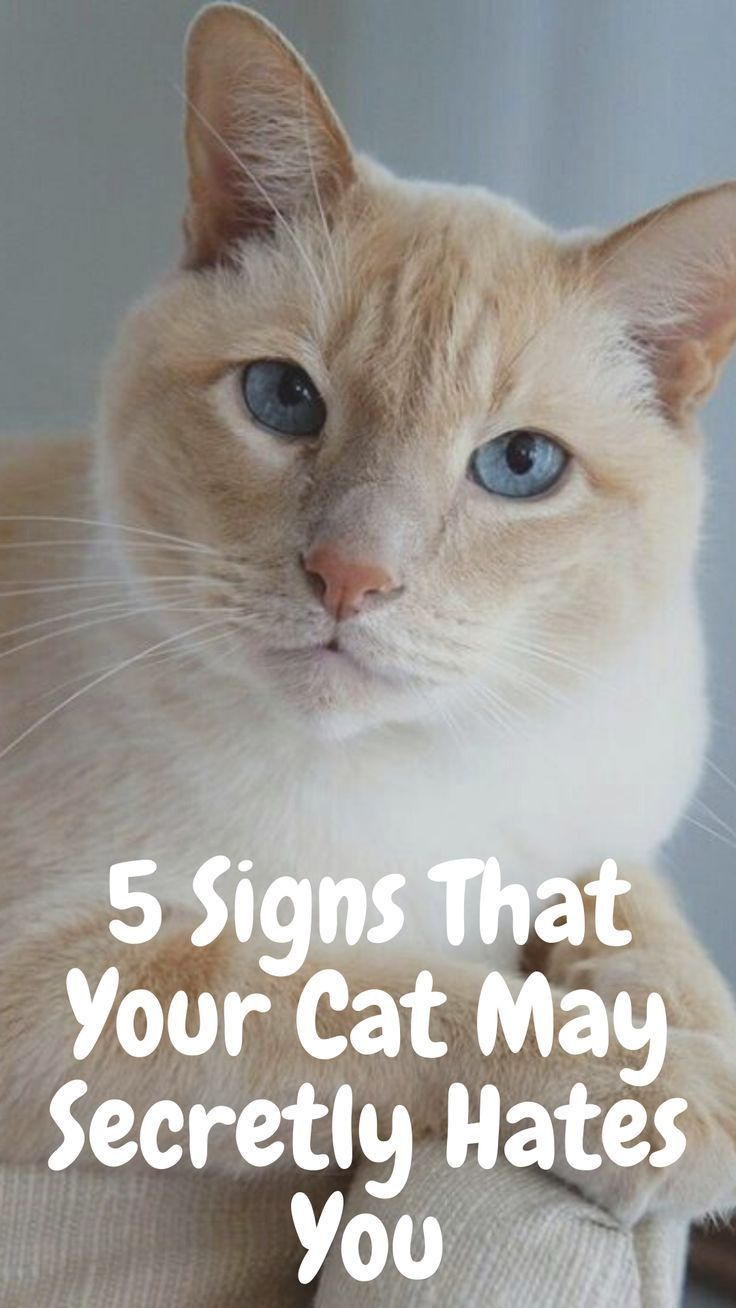 5 Signs That Your Cat May Secretly Hates You Cats Funny In 2020 Funny Cats Cats Cat Health