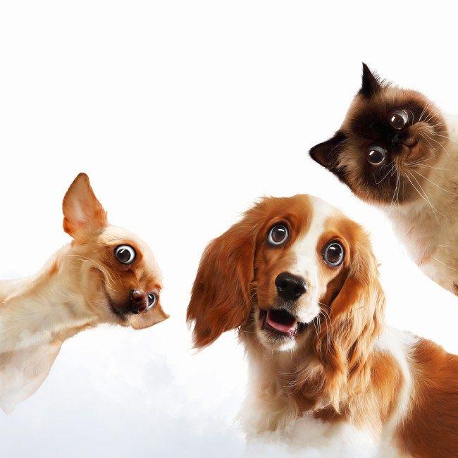 #hayvanları #kullanarak #hakaret #etme #hayvansevgisi Hayvanların isimlerini kullanarak hakaret etmeyin