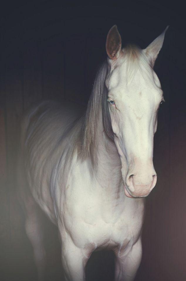 blue eyed beauty.. Albino horse