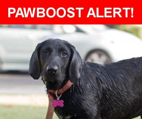 Please spread the word! Abby was last seen in Bakersfield, CA 93308.    Nearest Address: Near Park Meadows Dr & Greenwood Meadow Ln