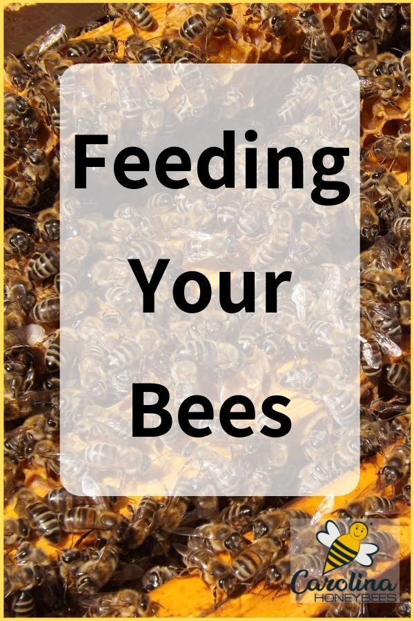 How To Make Pollen Patties For Bees Carolina Honeybees Feeding Bees Bee Keeping Bee
