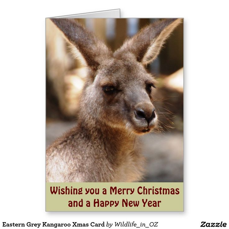 Eastern Grey Kangaroo Xmas Card - Australian Wildlife. Click on photo to view item then click on item to see how to purchase that item. #christmascard #xmascard #kangaroo #easterngreykangaroo #wildlife #australianwildlife #zazzle