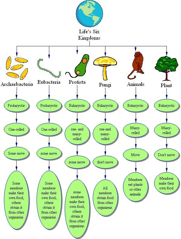 Kingdom biology  Wikipedia