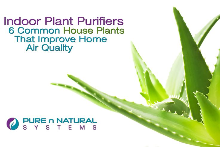 Common House Plants That Clean & Purify The Air: https://www.purennatural.com/indoor-plant-purifiers/