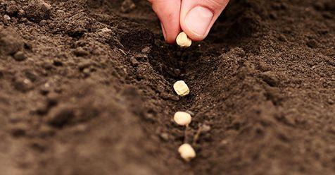 Μωσαϊκό: Δωρεάν σπόροι ελληνικών ποικιλιών
