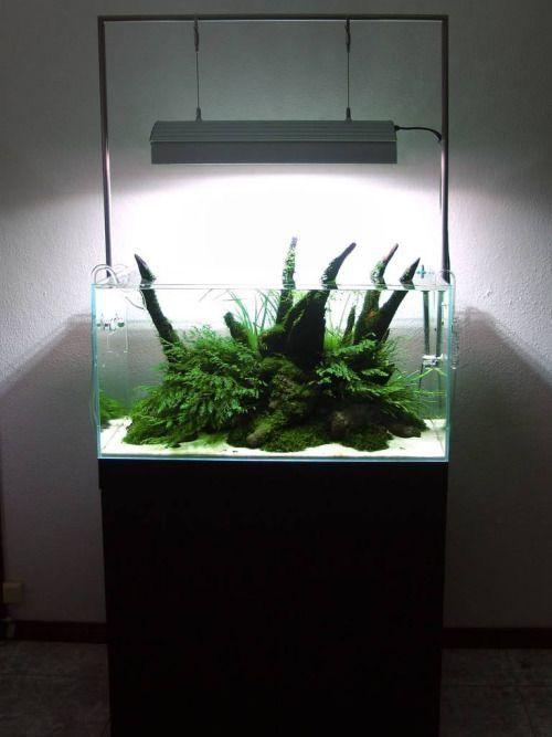 Foresta verde  www.ibrio.it your aquarium born here ! il tuo acquario nasce qui ! https://www.facebook.com/ibrio.it #ibrio #acquario #acquari #acquariologia #acquariofilia #aquarium #aquariums #piante #natura #pesci #zen #design #arredamento #layout #layouts #layoutdesign #roccia #roccie  #moss #freshwater #plantedtank #aquadesignamano #tropicalfish #fishofinstagram #aquaticplants #natureaquarium #nanotank #reefkeeper #nanoreef #saltwateraquarium from web