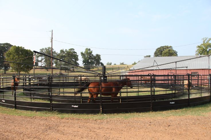 Working horses in both directions helps to keep them balanced in each lead