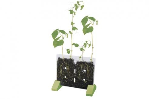 Sprout & Grow root observation window: Wonderful for budding urban gardeners, allowing kids to watch seedlings blossom right in their bedrooms. The all-inclusive package includes bean and pea seeds, and a journal to document the plants' growth.