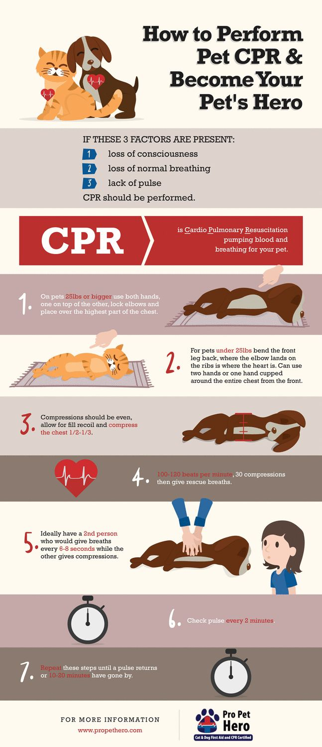 Cat and Dog CPR Having the knowledge to save your pet is literally possessing the ability to be their hero. It sounds like a grandiose concept but you shouldn't think of this skillas somethi…