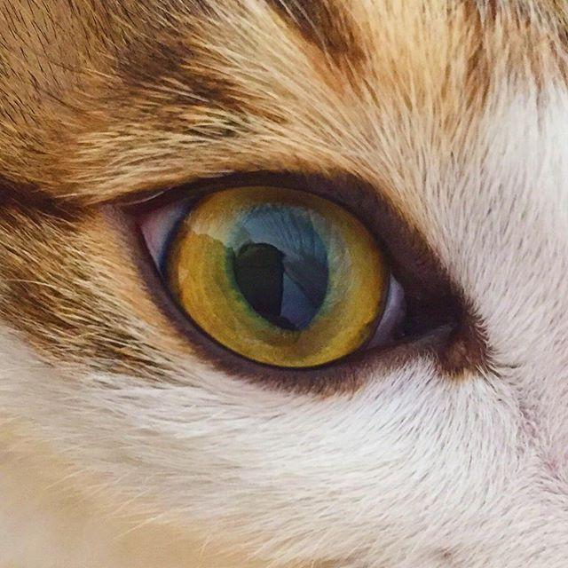 . . . #냥스타그램 #고양이 #눈 #고양이눈 #털복숭이 #cat #catstagram #catsofinstagram #purr #fluffy…