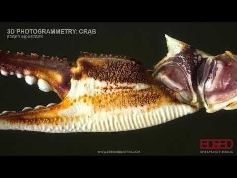 Crab Photogrammetry Exploration