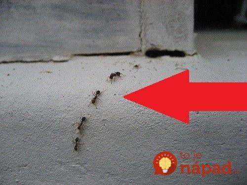 Tipy, ako sa zbaviť mravcov bez chémie