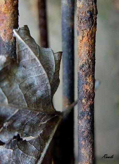 rusty leaf..