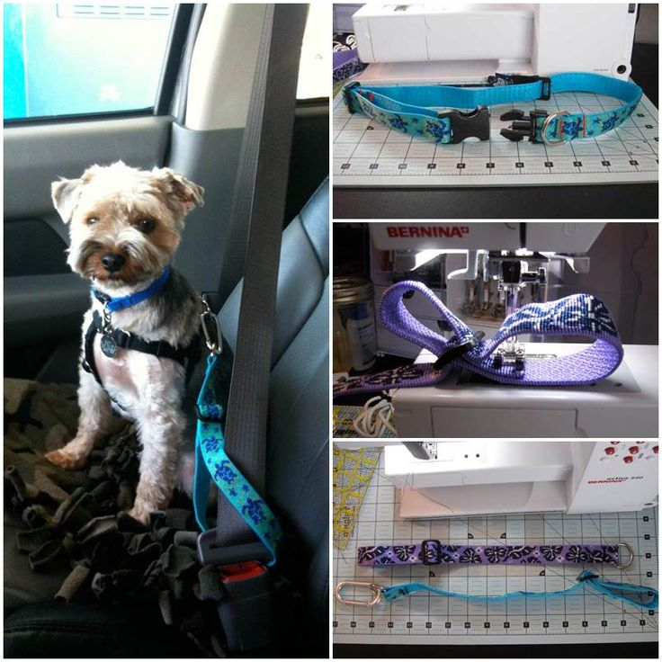 246 best sewing for the puppy dogs images on pinterest dog diy dog seatbelt solutioingenieria Gallery