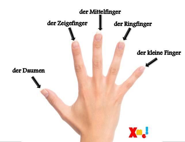 Hand   Deutsch