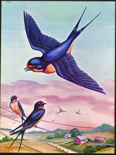 Barn Swallows & Telephone Wires - Helen Hansen - Vintage Print 1959   in Art, Art Prints   eBay