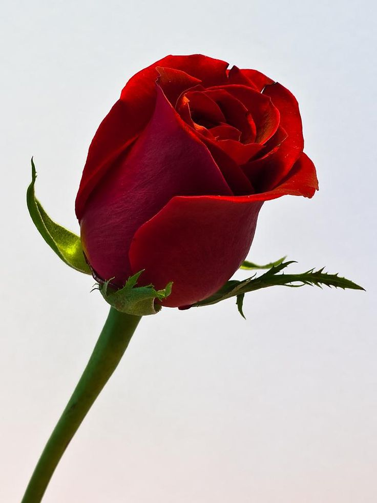 A single red rose... My hubby has sent me a single red