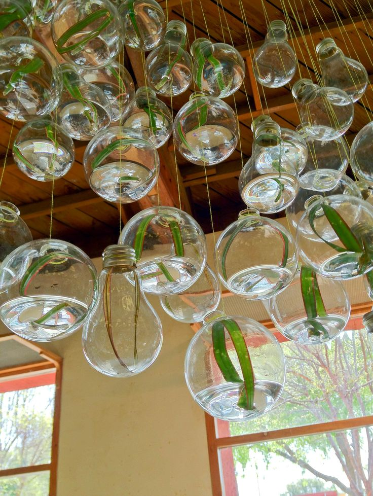 Glass Bulb Planters, anthropologie #Glass_Bulb #Planter, like clouds of glass and plants, awesome.