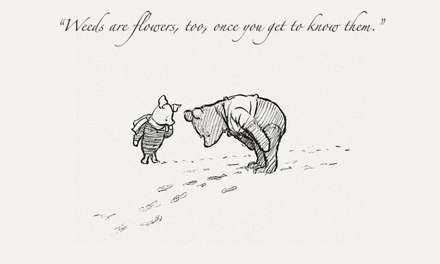 14 Beautiful Winnie-The-Pooh Quotes