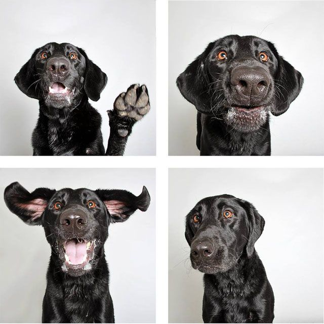 photobooth style dog portraits to help dogs get adopted