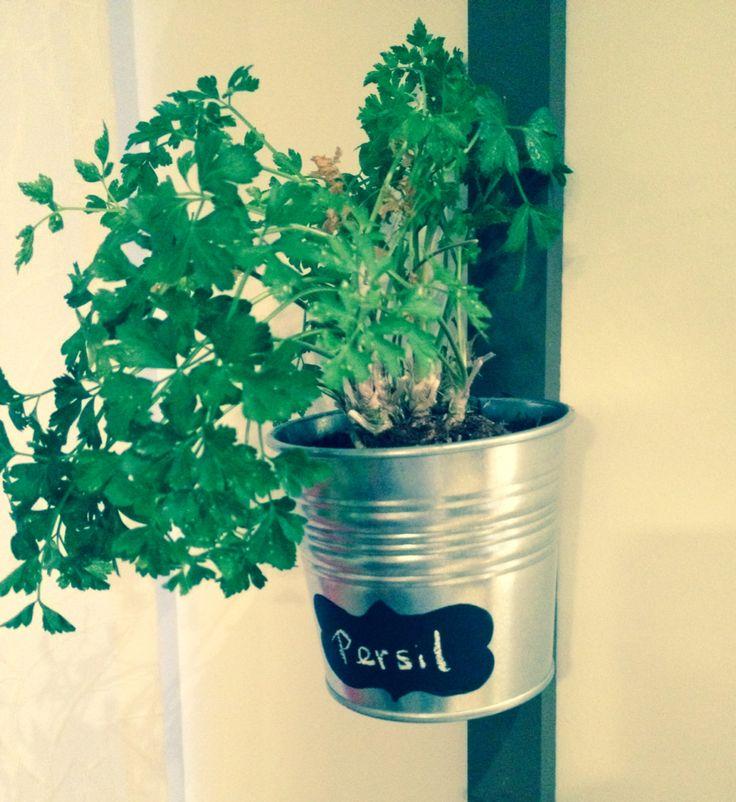 Fresh herbs all year round!