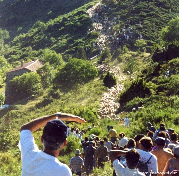 Agro Pastoralism Les Causses and Les Cevennes - Transhumance in France