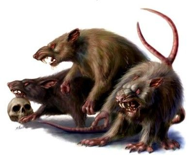 Giant Rat - Rollplay West Marches Wiki - Wikia