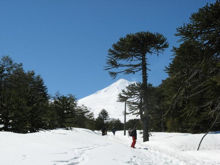 Cualquier lugar del sur de Chile