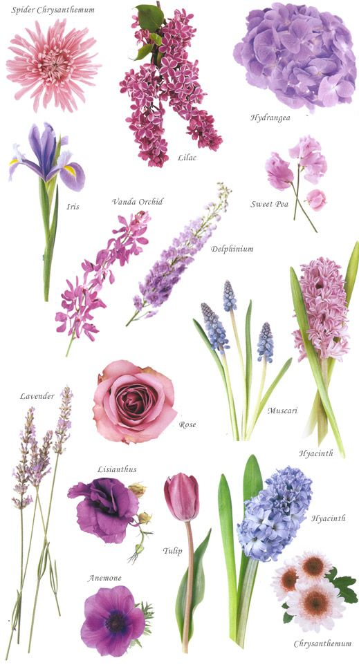 best  purple flower names ideas on   purple names, Beautiful flower