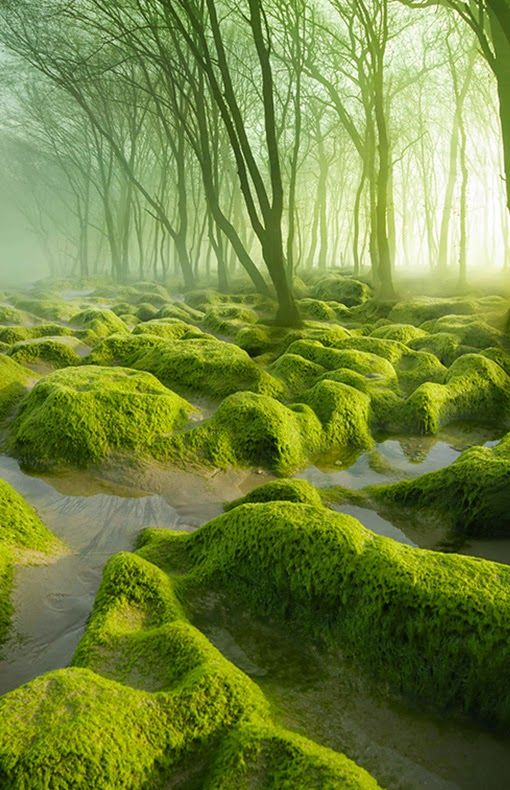 The Moss Swamp