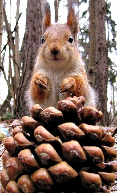 """""""Oooh I possibly couldn't"""" -- somehow the squirrel looks English<<it looks like Peter Pettigrew"""
