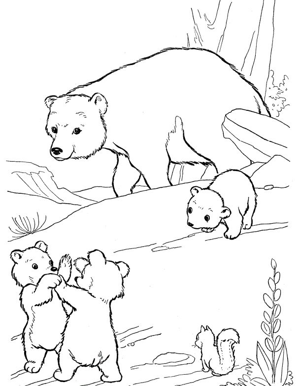 20 best Bear images on Pinterest  Bear Coloring and Coloring pages