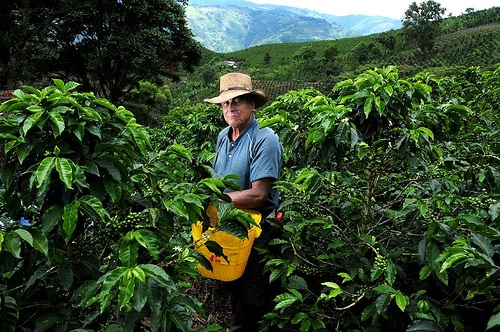 Colombian Coffee Farmer.   Recently declared a UNESCO World Heritage Site in June 2011, Colombia's Coffee Triangle is known for producing the world's best coffee. Let the aroma and the taste of coffee surround you, while getting to know the beauty of the key regions. Keeping in tradition with its diverse culture and landscapes, Colombia pays tributes to its roots by containing food that is a mixture of Indian, Spanish, African and Arabic cuisines. Every region is has its own gastronomy…