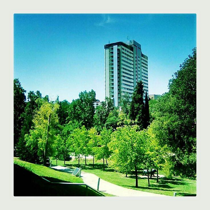Green saturation. Terrassa. July 2017. #fakepolaroid #green #instax #igerseurope #landscape #ok_europe #nature #park #picoftheday #polaroid #polaroidlove #polaroidpicture #polaroidphoto #mutuadeterrassa #saturation #terrassa #urban #urbanpark