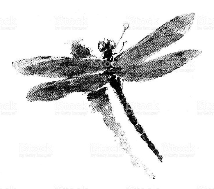 Mejores 13 imágenes de libellule e altri insetti en Pinterest ...