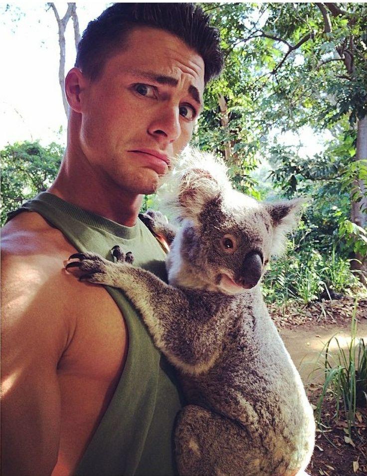 Colton and the cute koala   Colton Haynes   Colton haynes ...