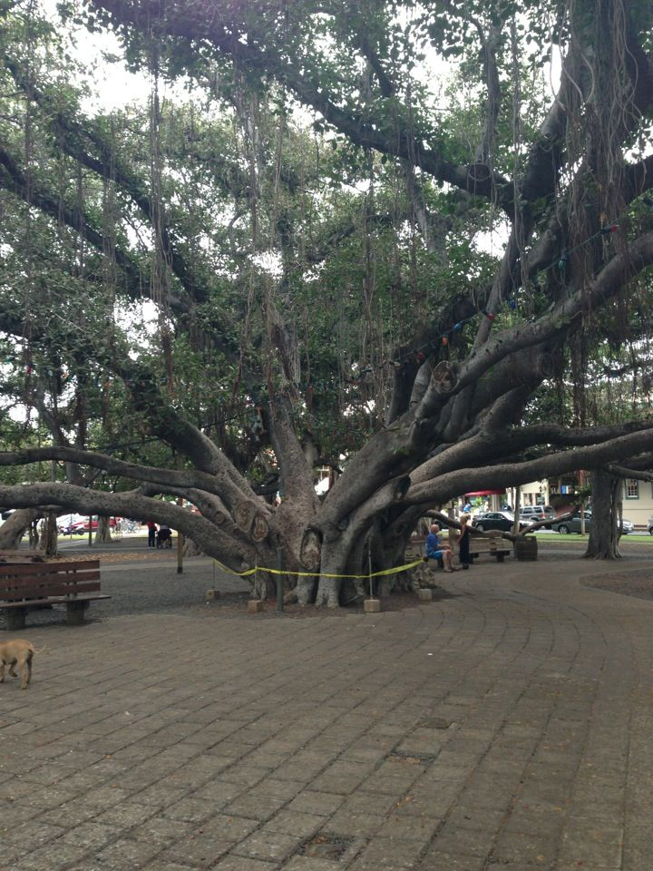 Don't miss this amazingly huge tree