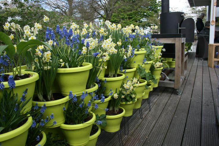 De kracht zit in de herhaling. Eetbare plantjes en sierbloemen in de culinaire inspiratietuin op Keukenhof 2014.