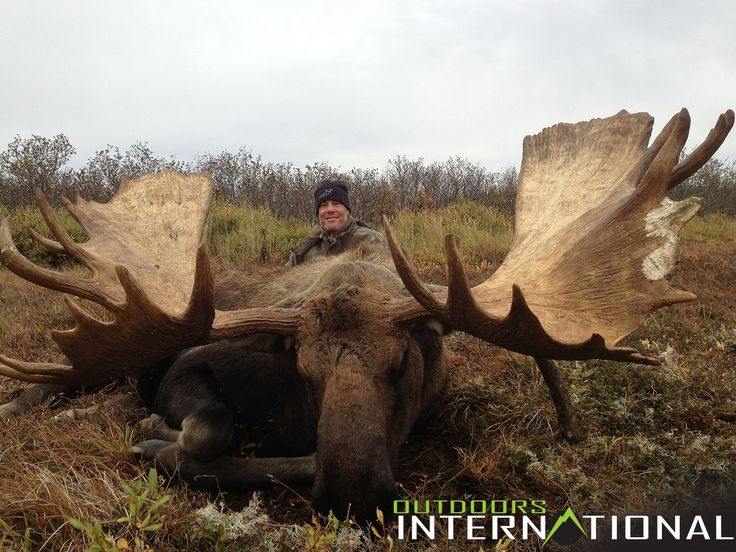 These DIY, unguided Alaska moose hunts can be a lot of work, but they are worth the effort, and the price will astonish you.