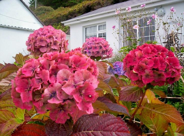 Irish Flowers Irish flower