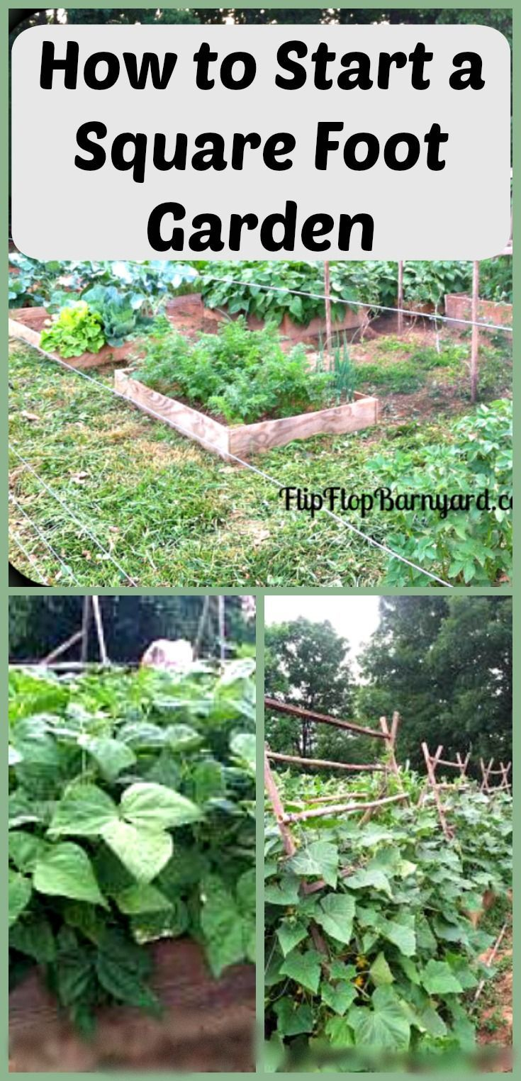 How to start a square foot garden on your homestead.