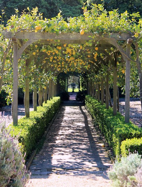 Lemon Arbor. Lotusland