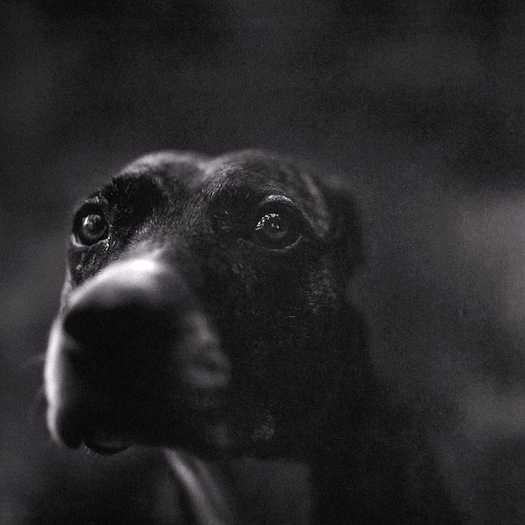 "keith carter ""Lost Dog"" from book ""Bones"""
