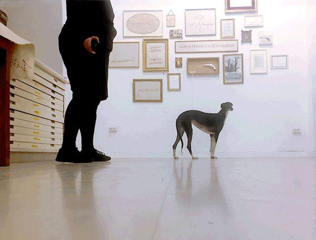Ida (alias miniberta) en el museo